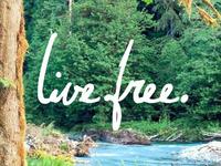 Live Free Rebound