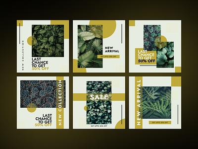 Instagram Post Collection   Plant Selling Offer 🌿 offer collection sale leaves leaf plant slim modern clean flat ui illustration graphic design ad design design social post media instagram