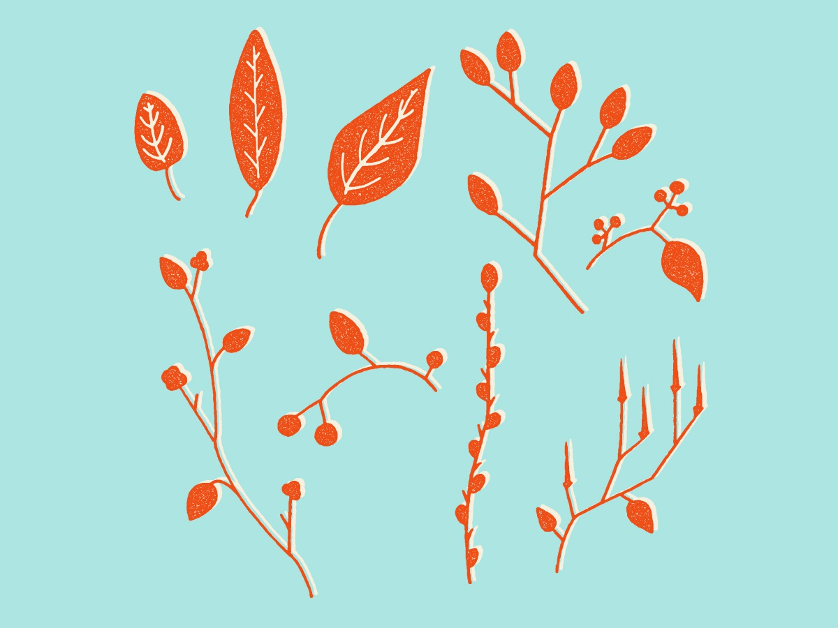 Even More Minimal'ish Nature Elements clean contemporary leaves nature floral pattern vector design minimal hand drawn drawing illustration