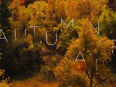 Autumn Air illustration trees fall typography photography