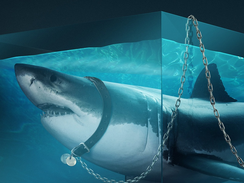 Shark shark photoshop