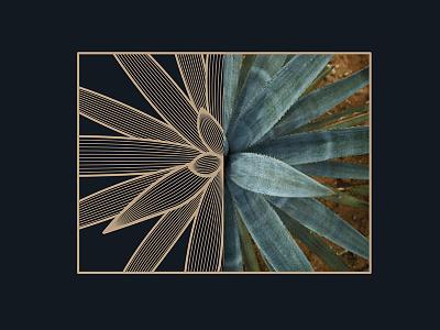 Agave Inspiration line-art blend plant agave