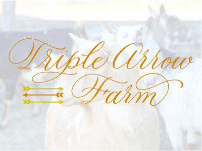 Triple Arrow Farms (of Columbia, IA) illustration design handlettering calligraphic hand lettering calligraphy