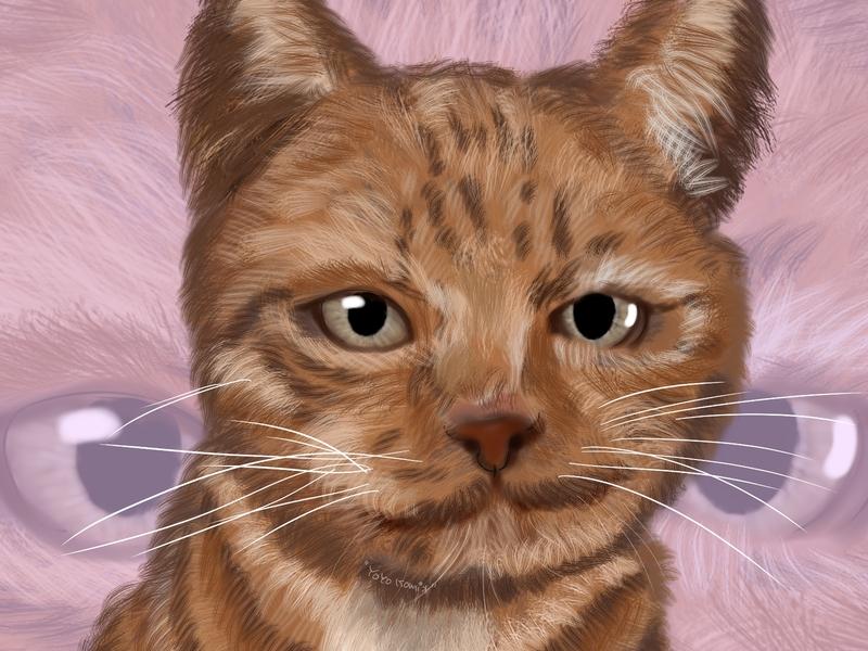 cat animal illustration animal art sketch illustration