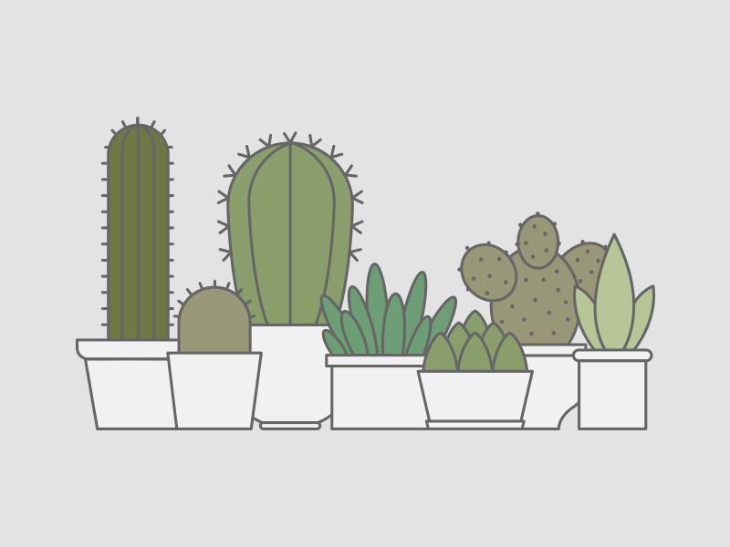 Succulents thorns green pot jar vessels leaves aloe vera cactus plants succulents