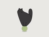 Cat in balance