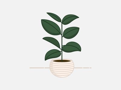 My Baby Ficus Elastica