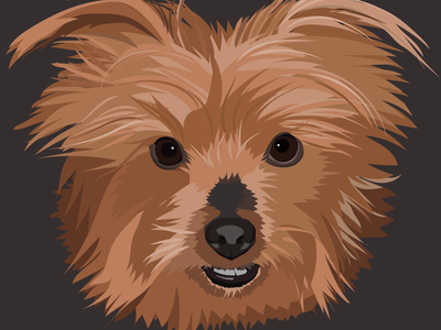 Misty the Yorkie vectorart pet portrait pet digital art illustration adobe illustrator