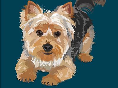 Buddy the Yorkie dog vector pet portrait illustration digital art adobe illustrator