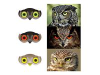 Owls logo design symbol explorations