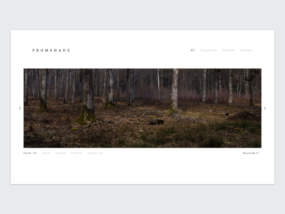 my Photography portfolio dayliui responsive web forest promenade photography photo portfolio