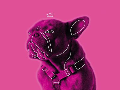 Dribbble Good Vibes Only - Pink good vibes fun animal doodle king design art pink frenchbulldog artwork
