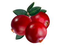 Cranberry • Taiga Romance