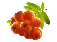 Ashberry • Taiga Romance
