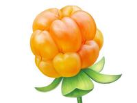 Cloudberry • Taiga Romance