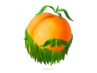 Bearded Apricot • Series of avatars for colleagues