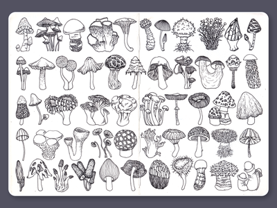 Mushrooms • Sketchbook ink blackandwhite lineart moleskine dotwork mushrooms drawing illustration