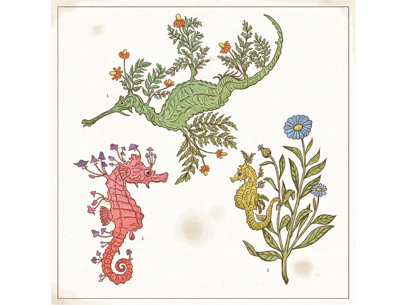 Rarely Sighted vintage flowers plants botanical ocean seahorse scientific retro drawing graphic character texture illustration