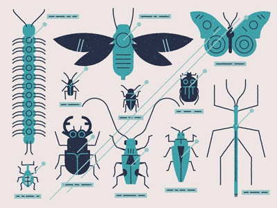 Bug collection entymology vector texture bugs beetle glass muti editorial insects