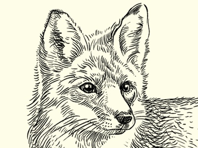 The Quick Brown Fox drawing ears illustration monochrome digital fox sketch linework muti eyes animal fur