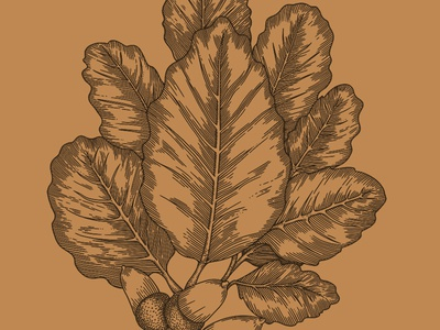 OTOÑO acorn leaf vintage monochrome etching ham packaging label illustration