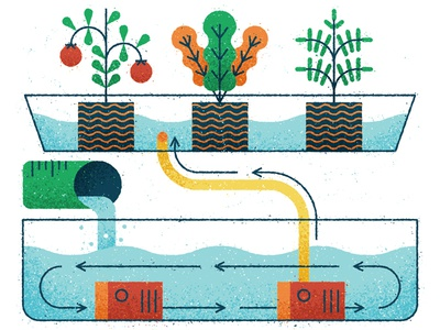 Aquaponics pump technical arrow texture grow editorial vector water diagram nature plant illustration