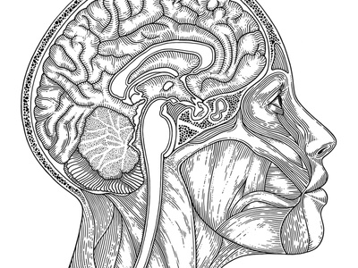 The Science of Belief monotone digital diagram line work anatomy human drawing etching illustration