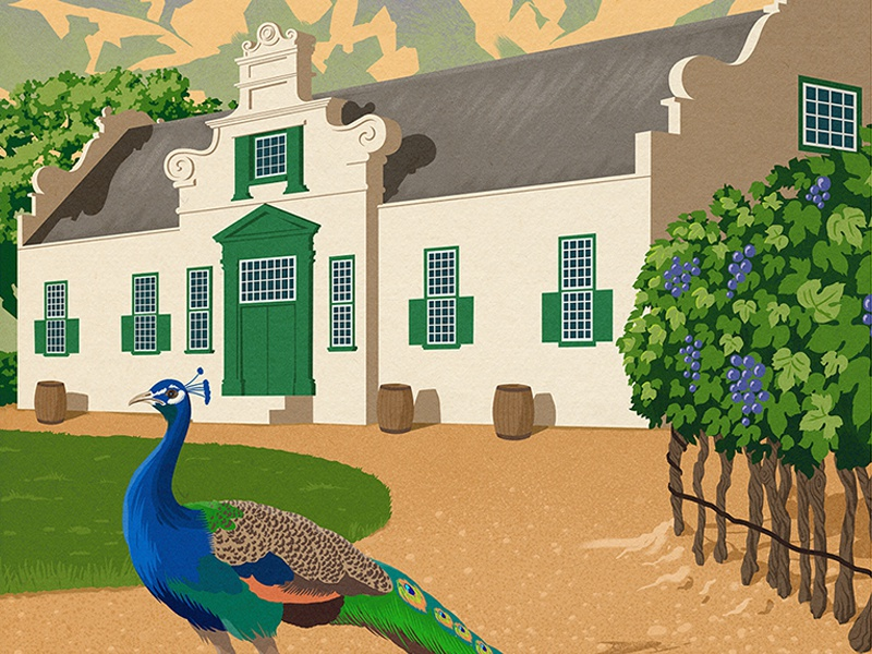 Beautiful Winelands wineyard scene mountain house bird winery peacock poster travel texture digital painting illustration