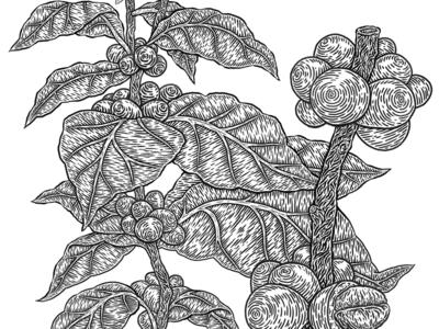 Botanical Illustration linework leaf plant vintage monochrome etching drawing illustration