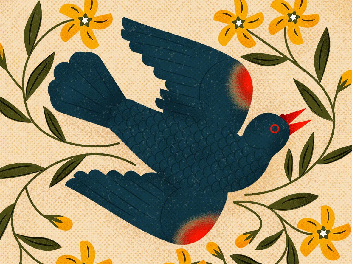 Black Bird packaging bird design vintage graphic flat vector character texture illustration