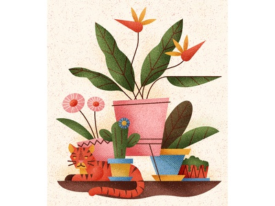 Domesticated feline texture pots plant leaves flowers indoors plants cat