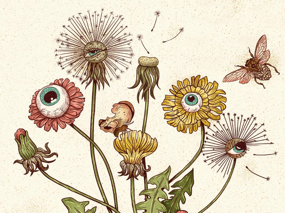 Dandelion plant flower insects botanical vintage drawing texture illustration