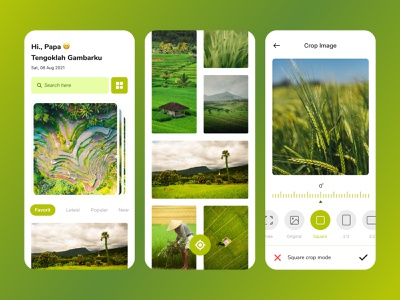 Photograph Apps garden field gradient phenomena interface photograph mobileapp forest jungle natural grass uxdesign uidesign ux ui design color uiux ricefield