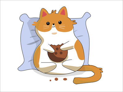 Кот животные котенок кот