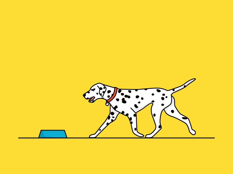 National Dog Day dalmation dog dog day