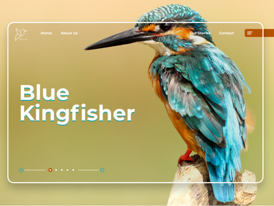 Humming Bird UI Design