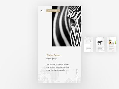 Plains Zebra ui freestyle what if habitat clean black white minimalist user interface zebra wildlife stripes african