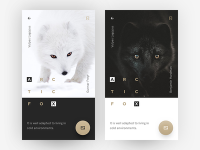 Arctic Fox ui user interface fox polar arctic simple clear black white minimalist what if ui freestyle