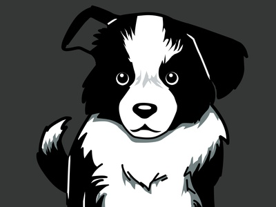 Border Collie border collie dog art animal cute art drawing adobe photoshop illustration design