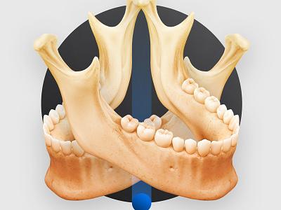 Jaw Sculpt illustration teeth medicine medart art medical anatomy jaw sculpt