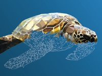 """""""Underwater Life"""" - a Low-poly illustration Research"""