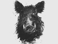 Wild boar illustration