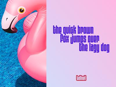 Flamingo Font figma typography font