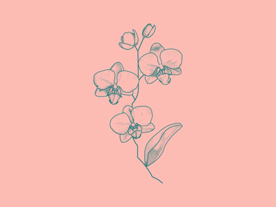 Orchids dots lineart botanical flower orchid sketch tattoo art tattoo vector illustration