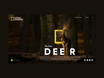 Nat Geo minimal web designer branding ux ui figmadesign design