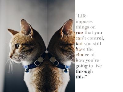 Oyen life quote cat reflection photoshop