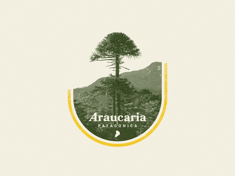 Araucaria Patagonica typography nature badge photography mountain woods neuquen argentina patagonia forest tree