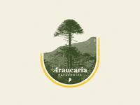 Araucaria Patagonica