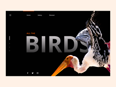 Bird Discovery Website website concept user interface design user interface birds bird web design website design website web minimalist minimal flat ui design