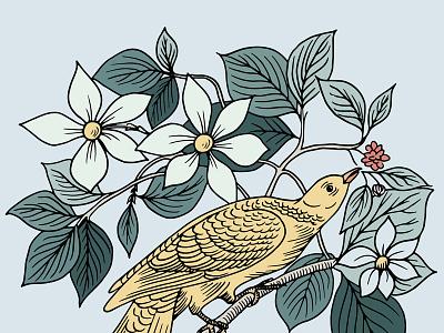 Botanical Bird Illustration brand illustration branding pastel digital illustration fauna flora audubon birds audubon vintage botanical bird illustration